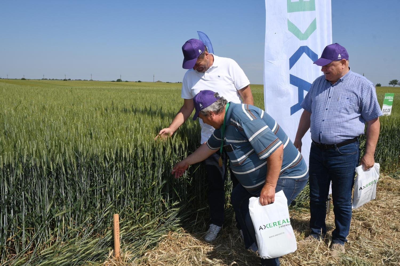 Ziua Grâului Bărăgan, preambul pentru un an excepțional la cultura de grâu